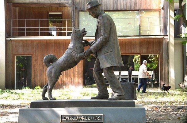 Chú chó Hachikou